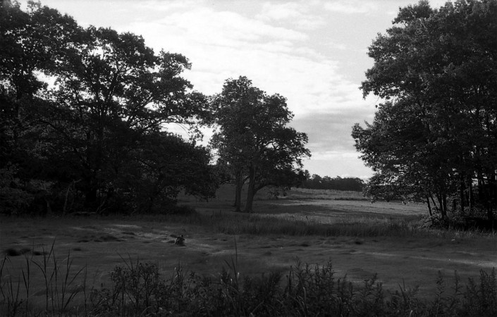 Marsh by Chelsea Ramsdell - Digital Photograph
