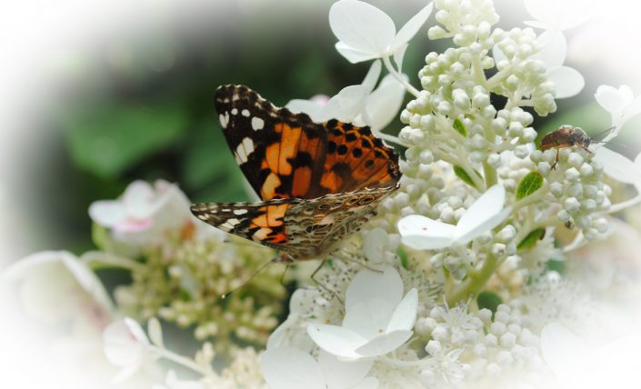 Butterfly & Bee by Breanna Cole - Digital Photograph