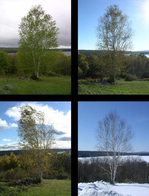 A View from the Birch by Brendan McCann - Digital Photographs