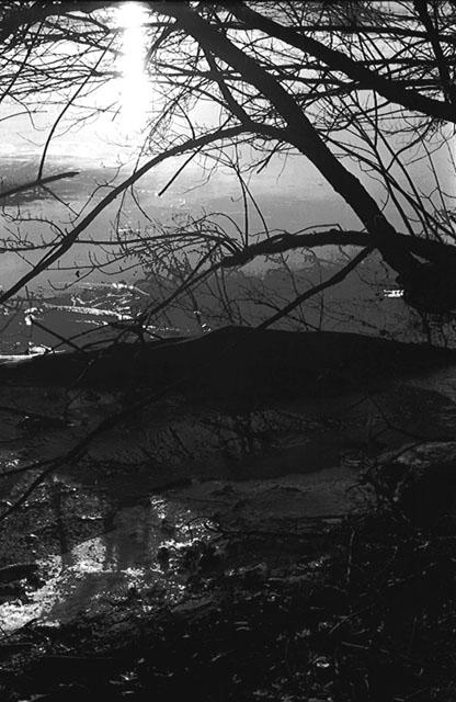 Harvey Lake by Nicole Campbell - B & W Photograph