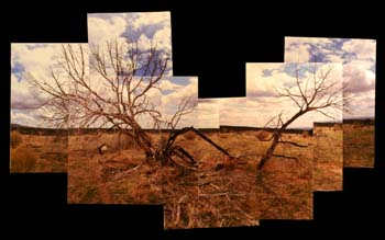 Pieced Together by Nicole Pelletier - Digital Color Photographs