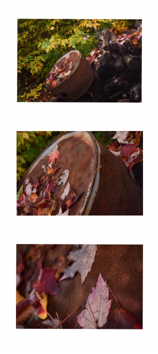 Rustic Leaves by Tyler LaMontagne - Color Digital Photograph